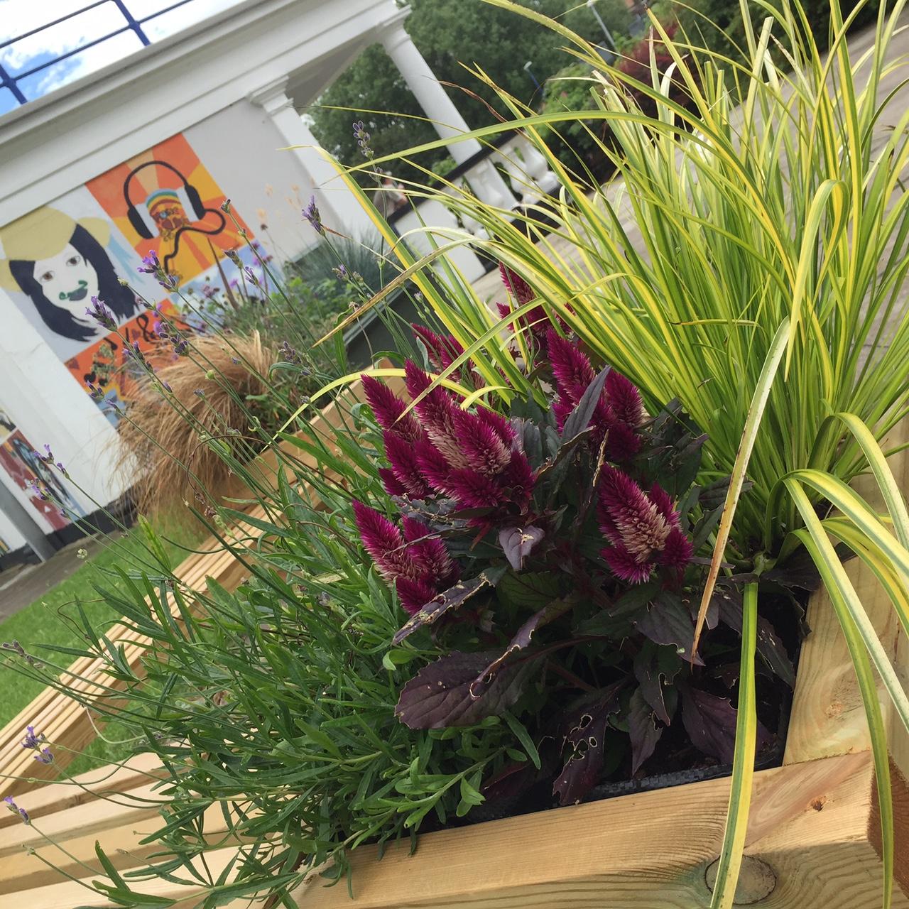 sensory garden 1