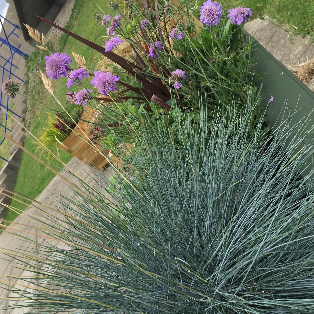 sensory garden 3